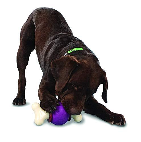 PetSafe Busy Buddy Bouncy Bone, Treat Holding Dog Toy, Medium/Large