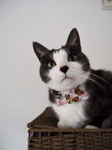 Amazon.com: necoichi oribon Kimono Bow Tie Gato Collar ...