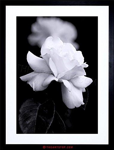 PHOTO NATURE BLACK WHITE ROSE PETAL FLOWER FRAMED PRINT F12X4204