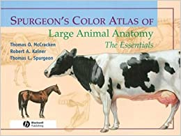 Spurgeon's Color Atlas of Large Animal Anatomy: The EssentialsSPURGEON'S COLOR ATLAS OF LARGE ANIMAL ANATOMY: THE ESSENTIALS by McCracken, Thomas O. (Author) on Feb-01-2008