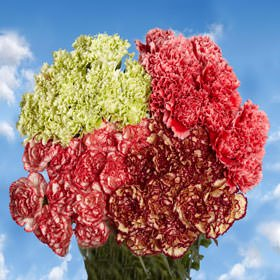 GlobalRose 200 Fresh Cut Novelty Color Carnations - Fresh Flowers Wholesale Express Delivery by GlobalRose (Image #3)