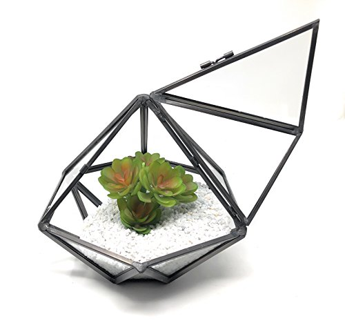 Ultra Diamond Style Terrarium 17x17x13cm Premium Quality Glass Terrarium Diamond Diamond shape Terrarium with a Cut-off Edge perfect for Moss and Plants or Decorations