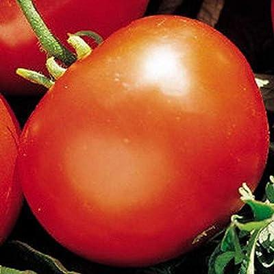 Manitoba Tomato Seeds (25 Seeds) : Garden & Outdoor