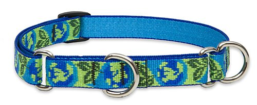 LupinePet 3/4-Inch Earth Day 14-20-Inch Martingale Combo Collar for Medium to Large Dogs