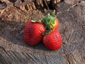12 x Erdbeeren 'Korona' ® - Fragaria 'Korona' ®