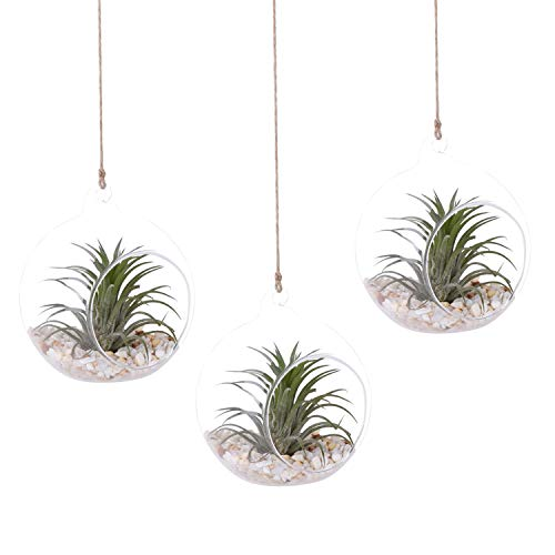 AUTOARK 4 3/4 inches Glass Globe - Hanging Succulent Air Plant Terrarium,Glass Vase Hanging Planter,Candle Holder,Home & Office Decor Accent,3 ()