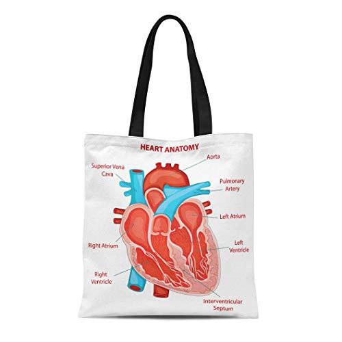 Semtomn Canvas Tote Bag Shoulder Bags Chamber Human Heart Anatomy Cross Section Diagram Biology Structure Women's Handle Shoulder Tote Shopper Handbag