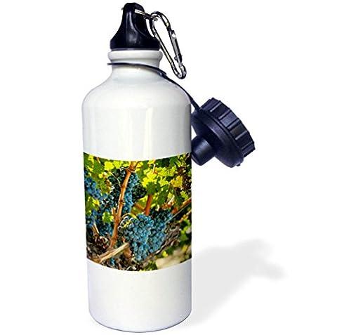3dRose Danita Delimont - Vineyards - Usa, Washington, Red Mountain. Merlot grapes. - 21 oz Sports Water Bottle - Red Usa Merlot