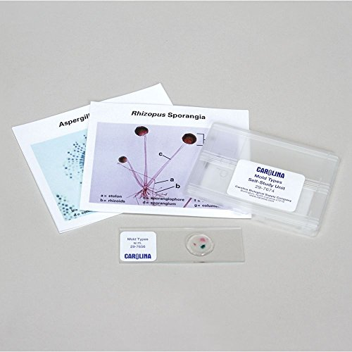 Discovering Mold Types Self-Study Unit, Microscope Slide Set