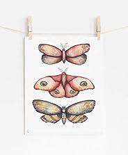 Watercolor Moths Wall Art (Trio A)