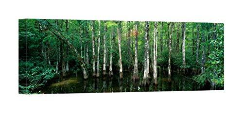 Easy Art Prints Panoramic Images's 'Big Cypress Nature Preserve, Florida, USA' Premium Canvas Art 30 x 10