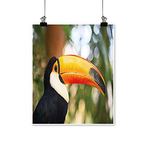 Modern Painting Colorful Tucan in The Aviary Artwork for Home Decorations,24
