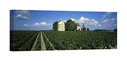 - Easy Art Prints Panoramic Images's 'Castle in a vineyard, Chateau Latour, Pauillac, Bordeaux, Medoc, France' Premium Canvas Art - 24