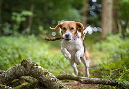 Weenect Dogs 2 - Le plus petit collier GPS pour chien au monde