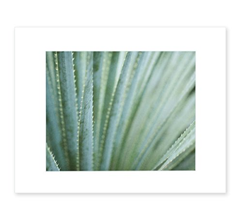 Abstract Green Botanical Wall Art, Modern Contemporary Wall Decor, 8x10 Matted Photographic Print (fits 11x14 frame), 'Strands and Spikes' by Offley Green
