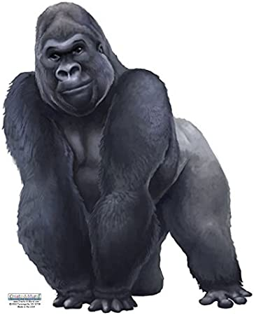 Amazon Com Jungle Animal Wall Decals For Kids Rooms Gorilla Kitchen Dining