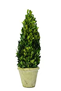 Preserved Boxwood Cone Topiary -16""