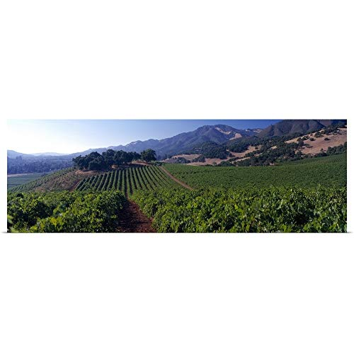 GREATBIGCANVAS Poster Print Entitled Kunde Estate Winery Sonoma County CA by 60
