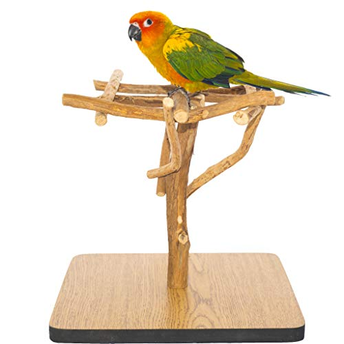(Birds LOVE Deluxe Dragonwood Tabletop Bird Stand Perch Gym Training Playstand Cockatiels Lovebirds Conures Parakeets 11.5