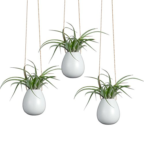 Pack of 3 Egg Shape White Pots Hanging Ceramic Vase Small Oval Planters for Air Plants or Flowers Use For House Decorations ()