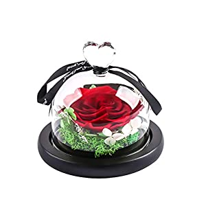 MAMS Preserved Real Rose in Glass Dome Gift Eternal Flower 55