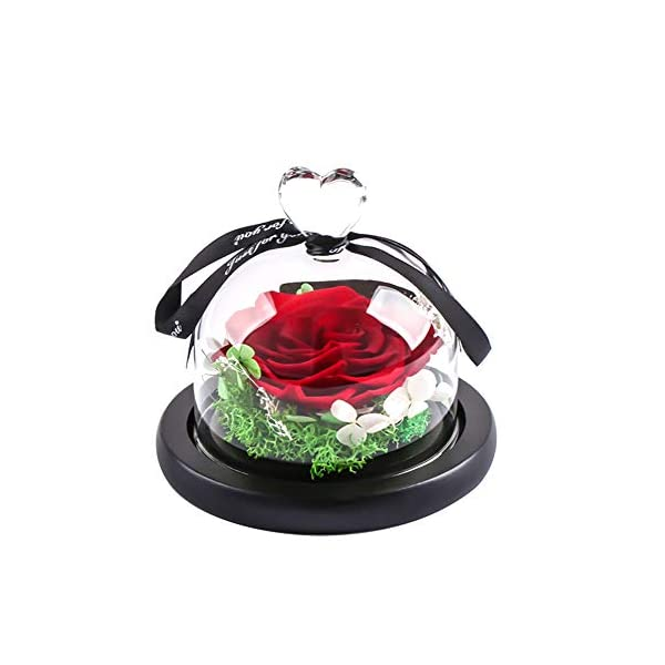 Ymachray Preserved Flower Rose -Eternal Rose with Gift Box Christmas