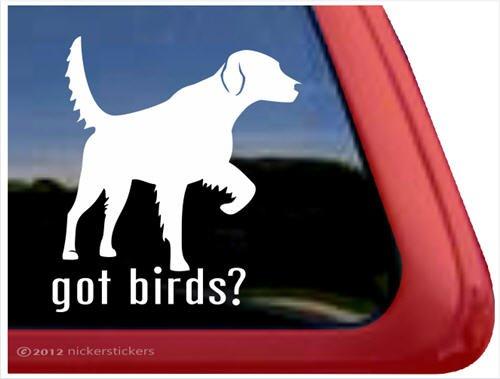 Got Birds? ~ English Setter Vinyl Window Auto Decal -