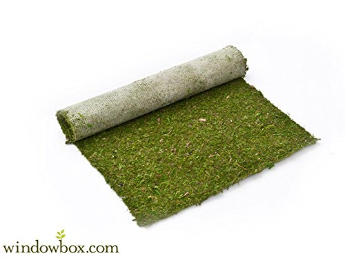 Preserved Green Moss Roll - 3 ft W x 25 ft L by Windowbox