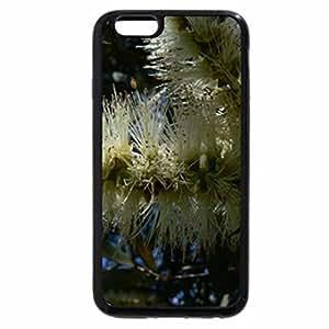 iPhone 6S / iPhone 6 Case (Black) FLOWERS OF THE MELALEUCA TREE