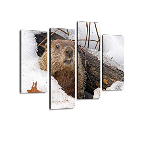 Groundhog Emerging from Snowy Den Canvas Wall Art Hanging Paintings Modern Artwork Abstract Picture Prints Home Decoration Gift Unique Designed Framed 4 Panel ()