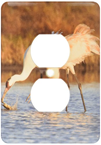 Larry Bird Cover - 3dRose lsp_146755_6 Whooping Crane Bird, Aransas Refuge, Texas, Usa Us44 Ldi0624 Larry Ditto 2 Plug Outlet Cover