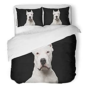 Semtomn Decor Duvet Cover Set Twin Size Pet Portrait of Purebred Dogo Argentino Dog Studio Adorable 3 Piece Brushed Microfiber Fabric Print Bedding Set Cover 2