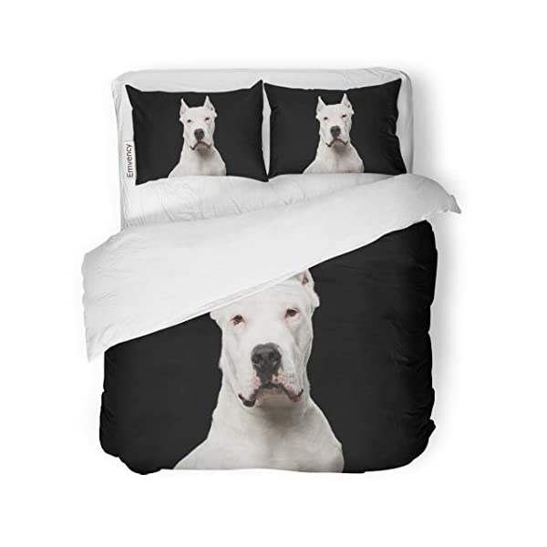 Semtomn Decor Duvet Cover Set Twin Size Pet Portrait of Purebred Dogo Argentino Dog Studio Adorable 3 Piece Brushed Microfiber Fabric Print Bedding Set Cover 1