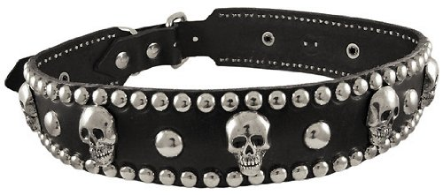 19 Inch Black Leather Skull Studded Dog Collar Small, My Pet Supplies