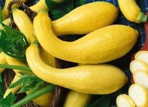 Non GMO Heirloom Yellow Summer Crookneck Squash (100 seeds)