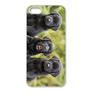 Triplets Dog Hight Quality Plastic Case for Iphone 5s by Maris's Diary
