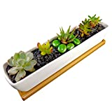 Succulent Planter - 11 Inch Long, Rectangle, White, Mini Ceramic Plant Pot with Bamboo Tray for Propagating and Growing Baby Succulents or Mini Cactus and Other Small Plants
