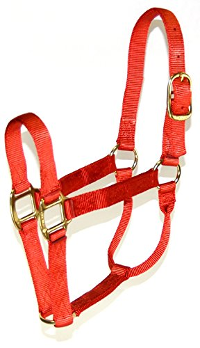 1600 Brick (Hamilton 1-Inch Nylon Quality Halter for 1100 to 1600-Pound Horse, Large, Red Brick)