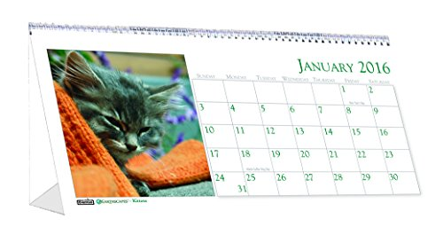 "House of Doolittle 2016 Monthly Desktop Tent Calendar, 8.5"" x 4.5"", Kittens (HOD3669-16)"