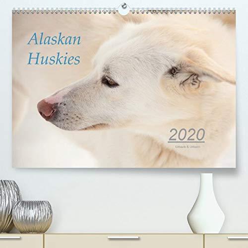 Alaskan Huskies (Premium-Kalender 2020 DIN A2 quer): Alaskan Huskies auf einer Hundeschlittenfarm im Norden Norwegens. (Monatskalender, 14 Seiten ) by Urbach & Urbach