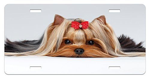 Ambesonne Yorkie License Plate, Lying Yorkshire Terrier with Cute Ribbon Yorkie Love Portrait of a Dog, High Gloss Aluminum Novelty Plate, 5.88 L X 11.88 W Inches, Pale Caramel Sand Brown