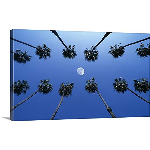 GREATBIGCANVAS Gallery-Wrapped Canvas Entitled Moon Between Rows of Palm Trees, Hollywood, Los Angeles, California, USA by 72