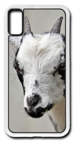 Cars Domestic Sport Compact (iPhone Xs Case Goat Kid Domestic Goat Cute Dwarf Goat Customizable by TYD Designs in White Rubber)