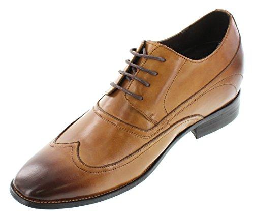 calto-a1136b-8,1cm Grande Taille-Hauteur Augmenter Chaussures ascenseur-Marron à Lacets Oxfords