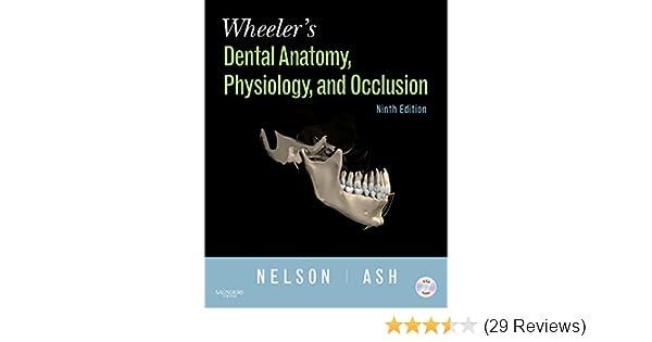 Wheeler\'s Dental Anatomy, Physiology and Occlusion, 9e ...
