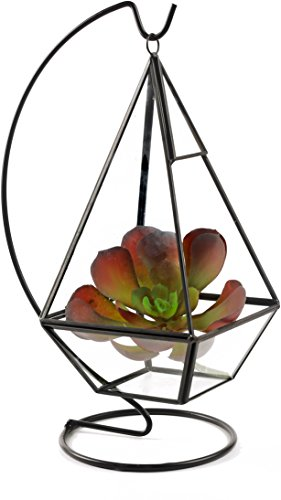 Circleware 32507 Terraria Glass-Plant Terrarium with Black Metal Frame-Stand, Home Decor Flower Balcony Display Box and Garden Gifts, 4.72