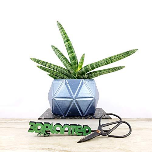 Blue Concrete Geometric Octagon Planter ()