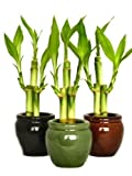 3 Colors Bamboo Style Mini Ceramic Vases 9 Stalks Lucky Bamboo Plant Best Gift