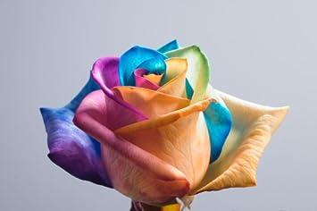 75e0dc89b0a4 Amazon.com   Tie Dye Ecuadorian Roses - 60 Single Stems Individually ...