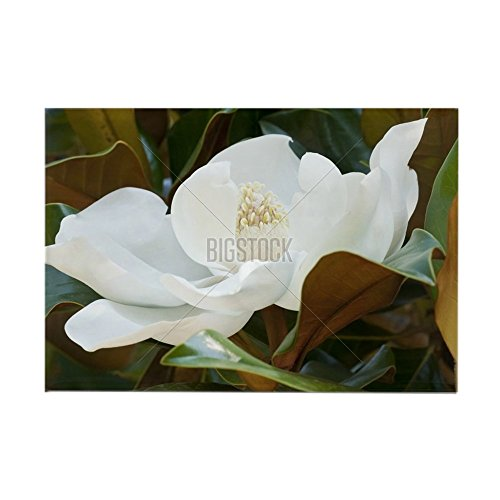 Garden Magnet Rectangle (CafePress - Flower of the Magnolia grandiflor Rectangle Magnet - Rectangle Magnet, 2